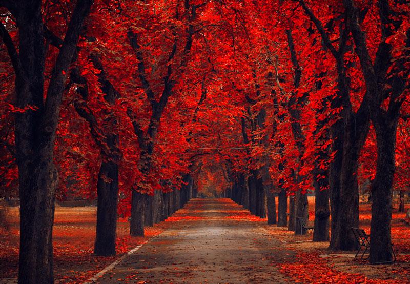 Удивительные и невероятные картинки красной осени - 20 фото 18