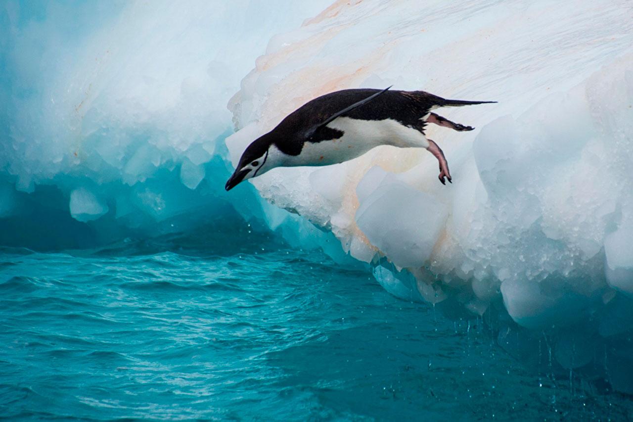 Прикольные и красивые картинки пингвинов - подборка 25 фото 20
