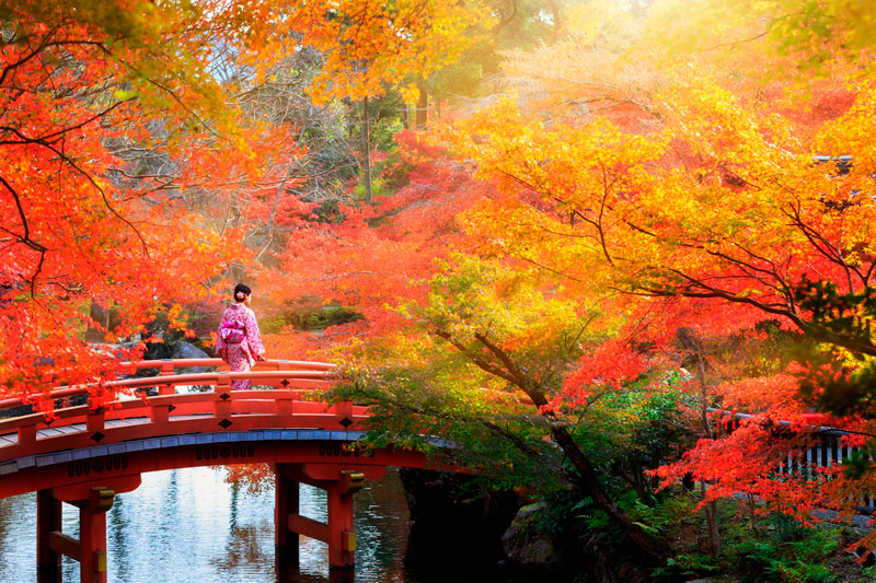Удивительные и невероятные картинки красной осени - 20 фото 19