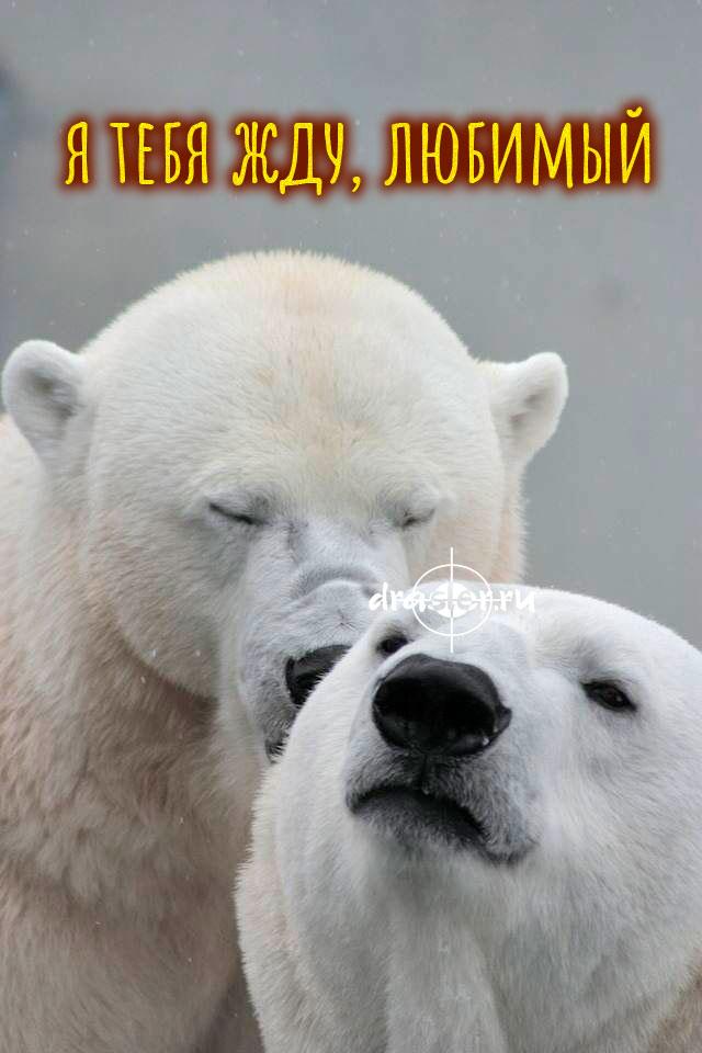 """Красивые и милые картинки """"Жду тебя любимый"""" - подборка 5"""