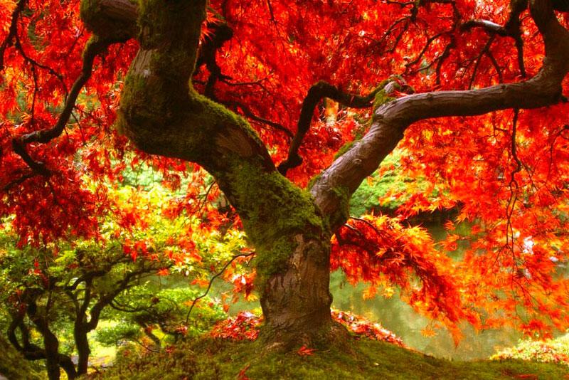 Удивительные и невероятные картинки красной осени - 20 фото 8