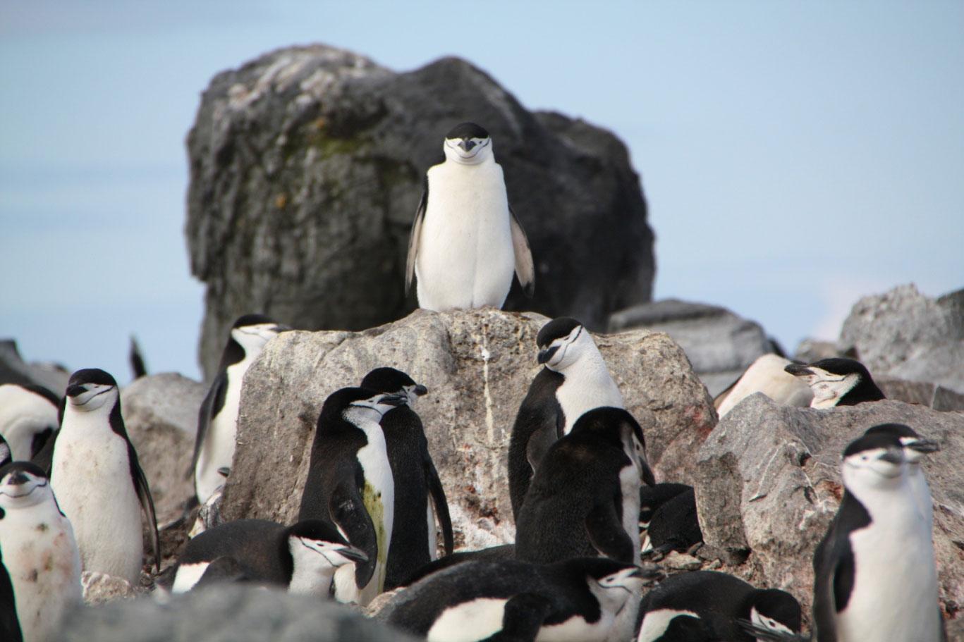 Прикольные и красивые картинки пингвинов - подборка 25 фото 15