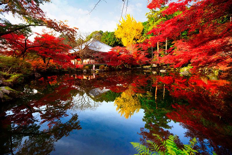 Удивительные и невероятные картинки красной осени - 20 фото 14