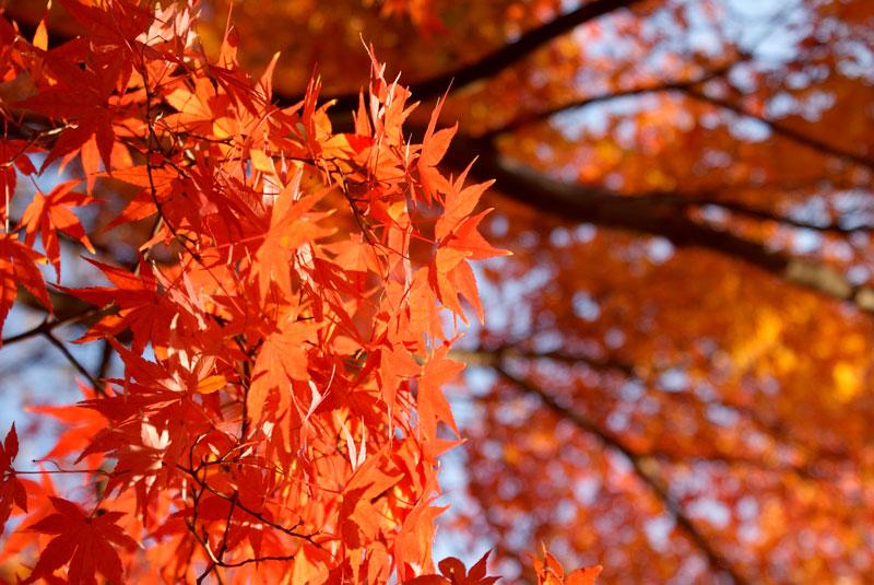 Удивительные и невероятные картинки красной осени - 20 фото 15