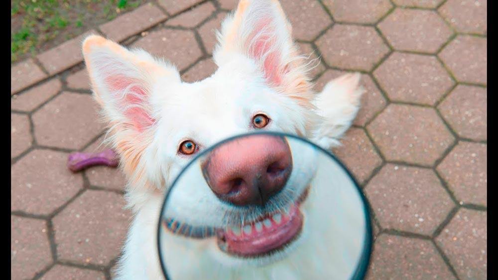 Смешные картинки про собак и щенков - подборка 13