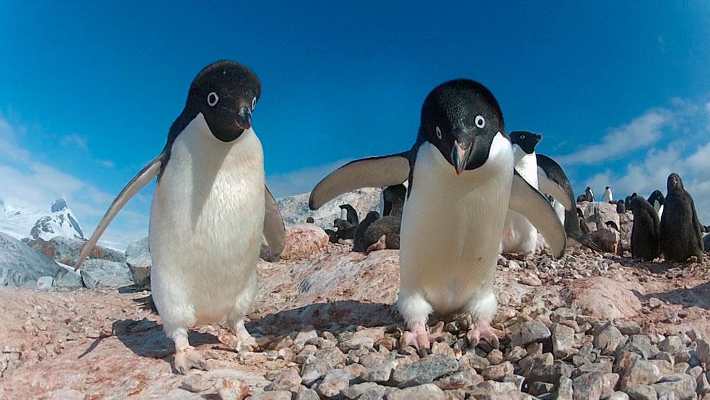 Прикольные и красивые картинки пингвинов - подборка 25 фото 17
