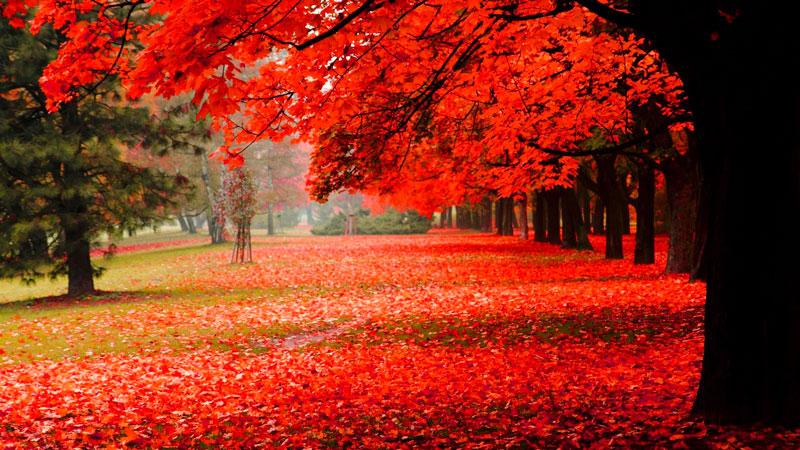 Удивительные и невероятные картинки красной осени - 20 фото 16