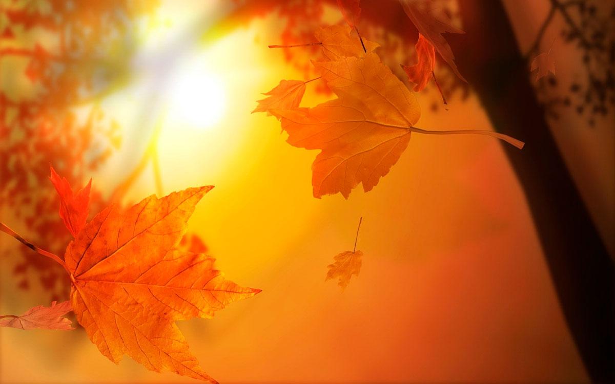 Удивительные и невероятные картинки красной осени - 20 фото 17
