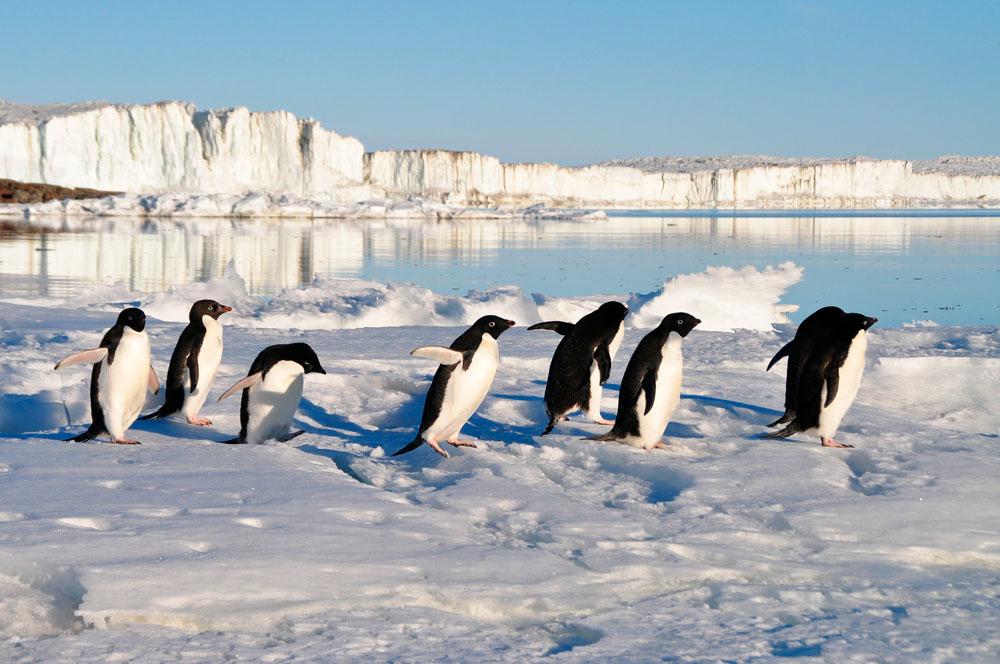 Прикольные и красивые картинки пингвинов - подборка 25 фото 21