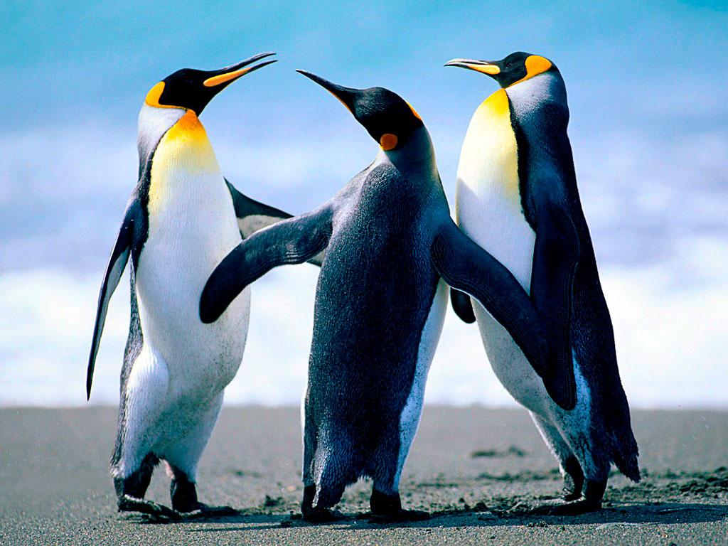 Прикольные и красивые картинки пингвинов - подборка 25 фото 18