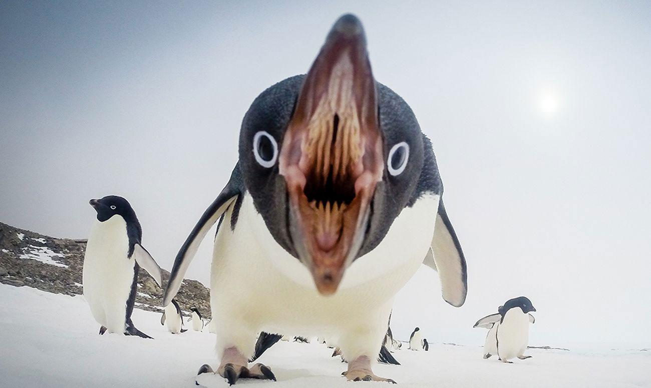 Прикольные и красивые картинки пингвинов - подборка 25 фото 22