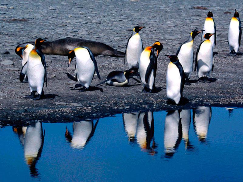 Прикольные и красивые картинки пингвинов - подборка 25 фото 24