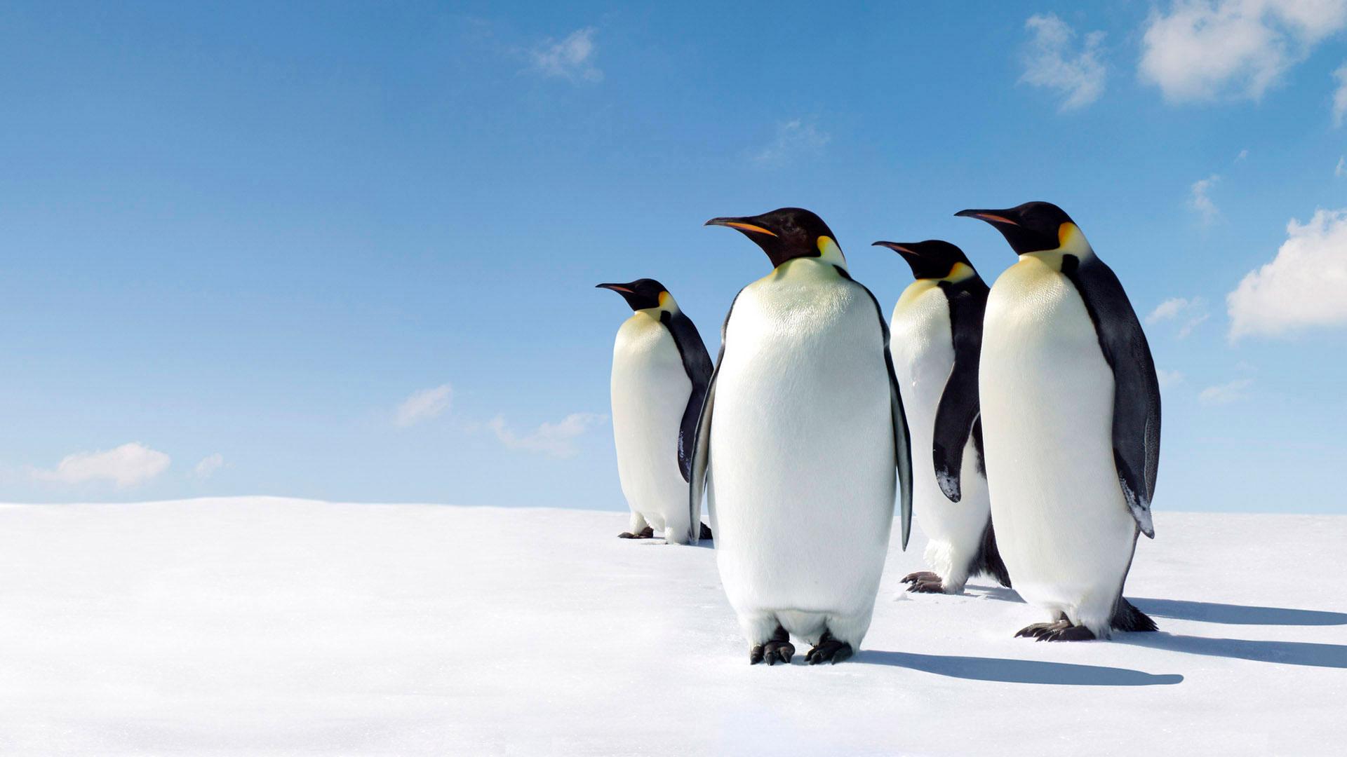 Прикольные и красивые картинки пингвинов - подборка 25 фото 23