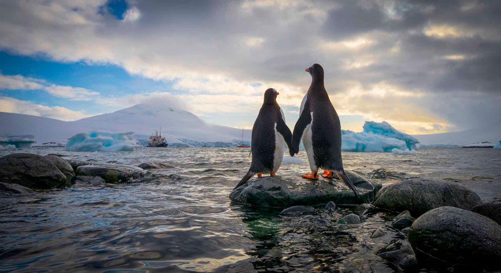 Прикольные и красивые картинки пингвинов - подборка 25 фото 25