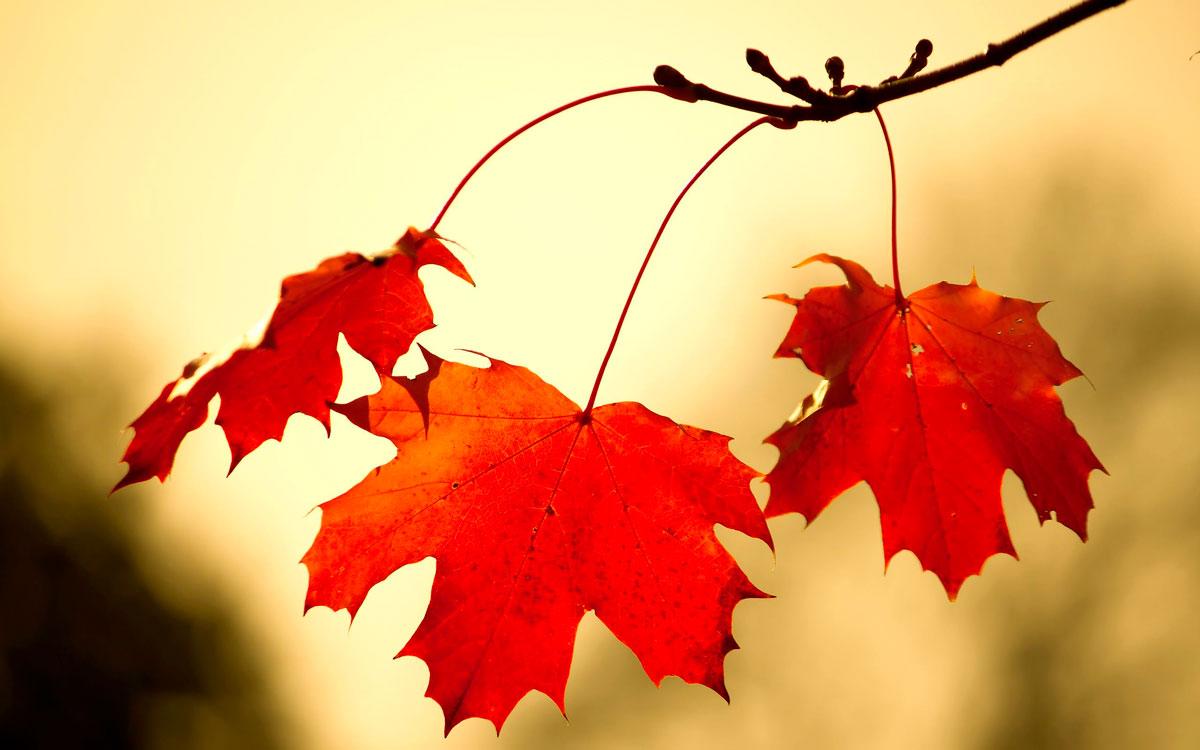 Удивительные и невероятные картинки красной осени - 20 фото 20