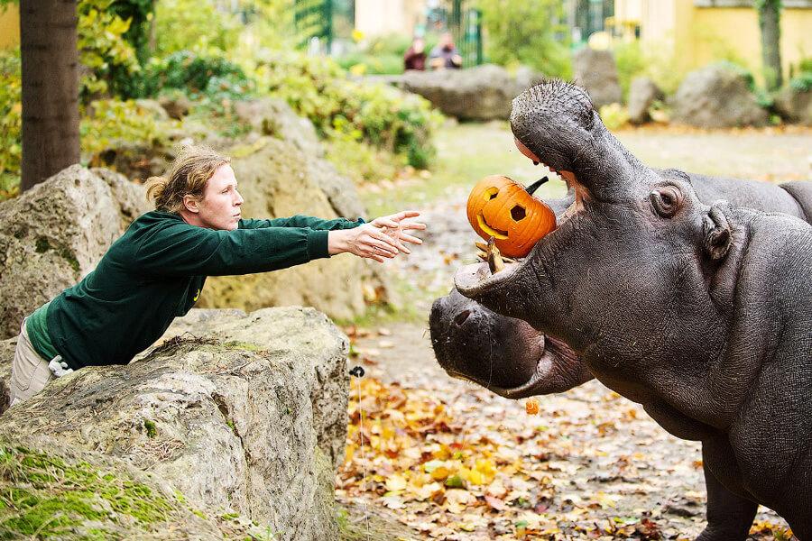 Красивые и прикольные картинки животных с тыквой - подборка 2