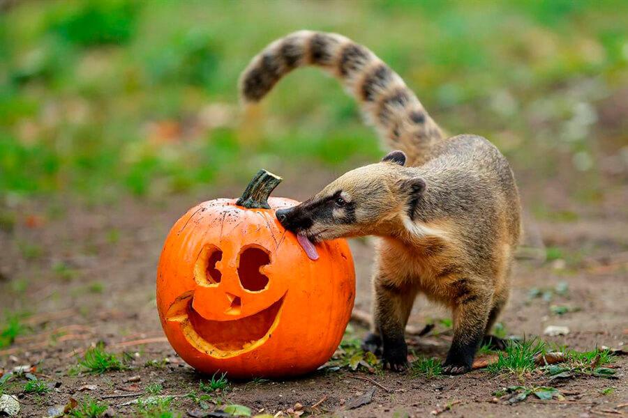 Красивые и прикольные картинки животных с тыквой - подборка 1