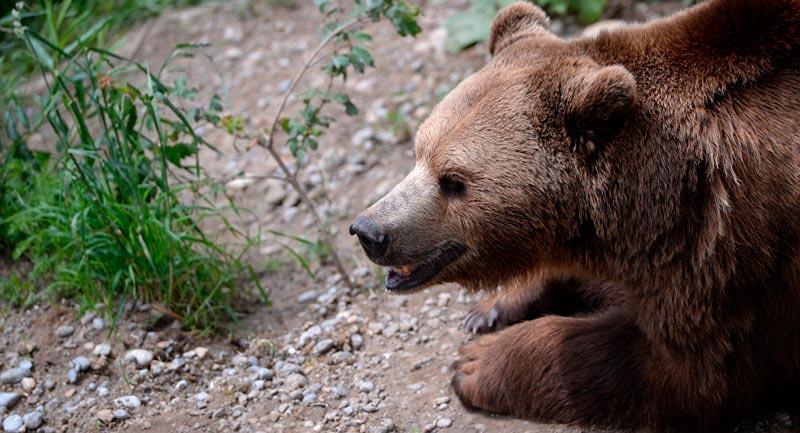 Красивые картинки, фотографии Медведя Гризли - подборка 6