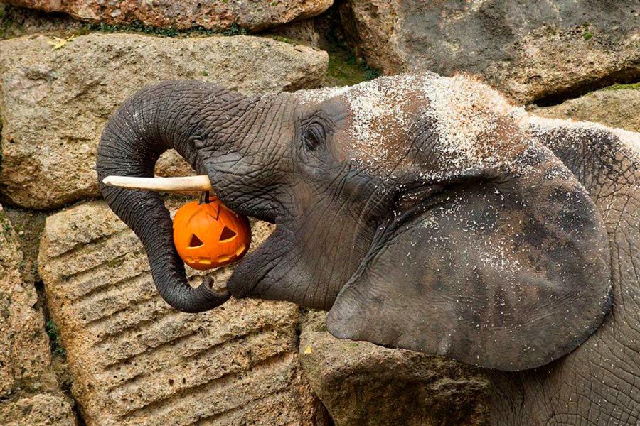 Красивые и прикольные картинки животных с тыквой - подборка 8