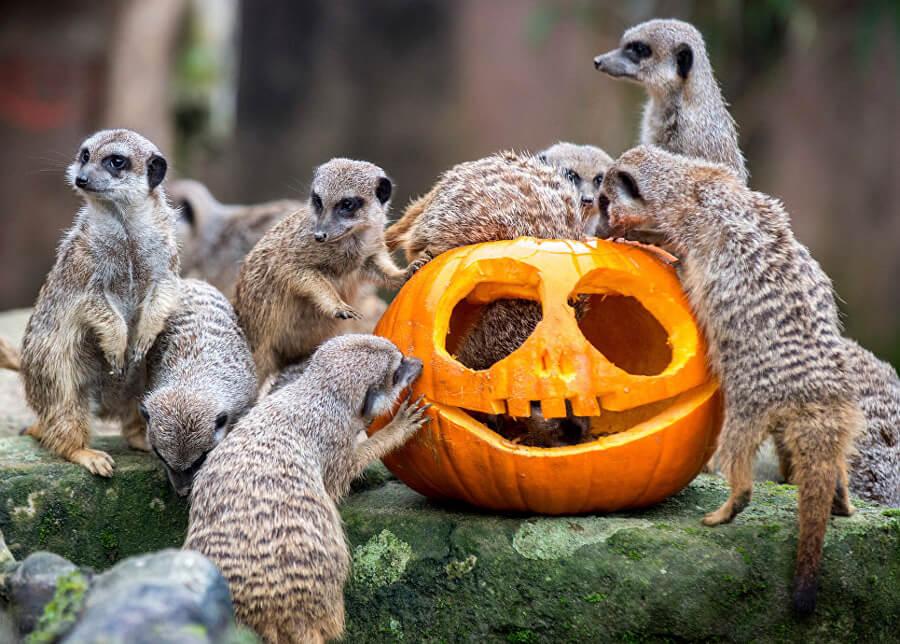Красивые и прикольные картинки животных с тыквой - подборка 9