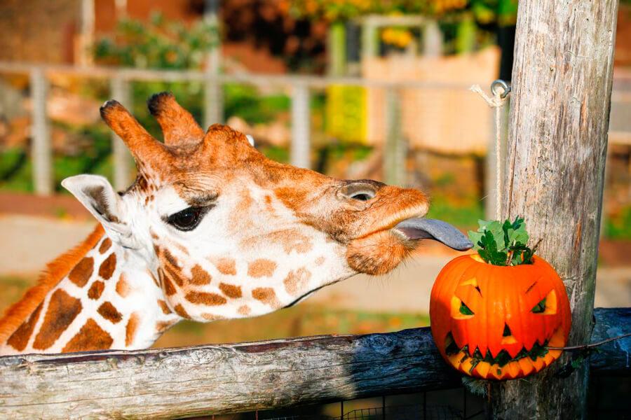 Красивые и прикольные картинки животных с тыквой - подборка 10