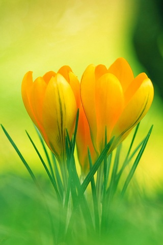 Красивые картинки цветов на телефон на заставку - 20 штук 1