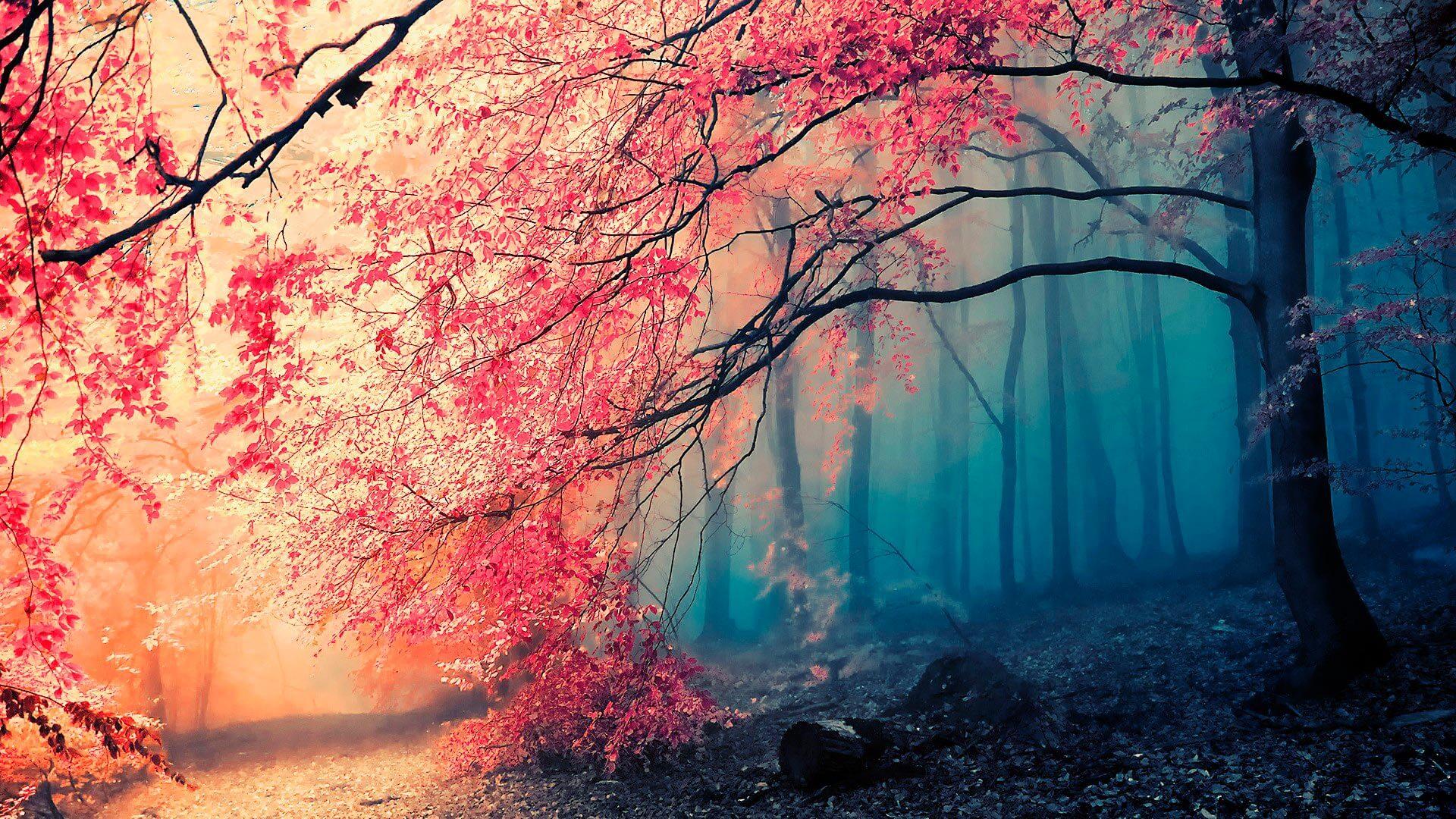 Красивые арт-картинки деревьев и природы - лучшие обои 1