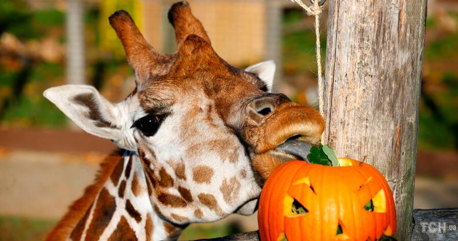 Красивые и прикольные картинки животных с тыквой - подборка 7