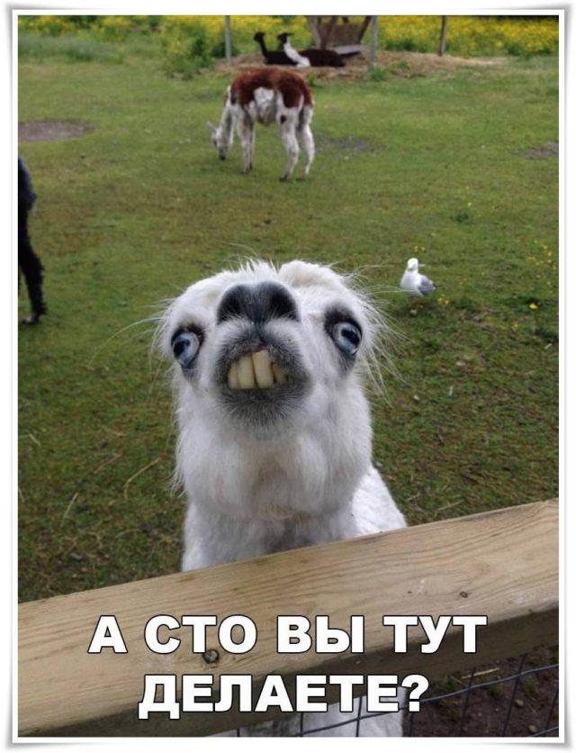 Веселые и смешные картинки, фото с текстом до слез - подборка 5