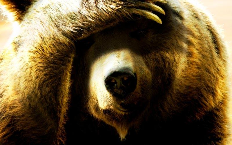 Красивые картинки, фотографии Медведя Гризли - подборка 3