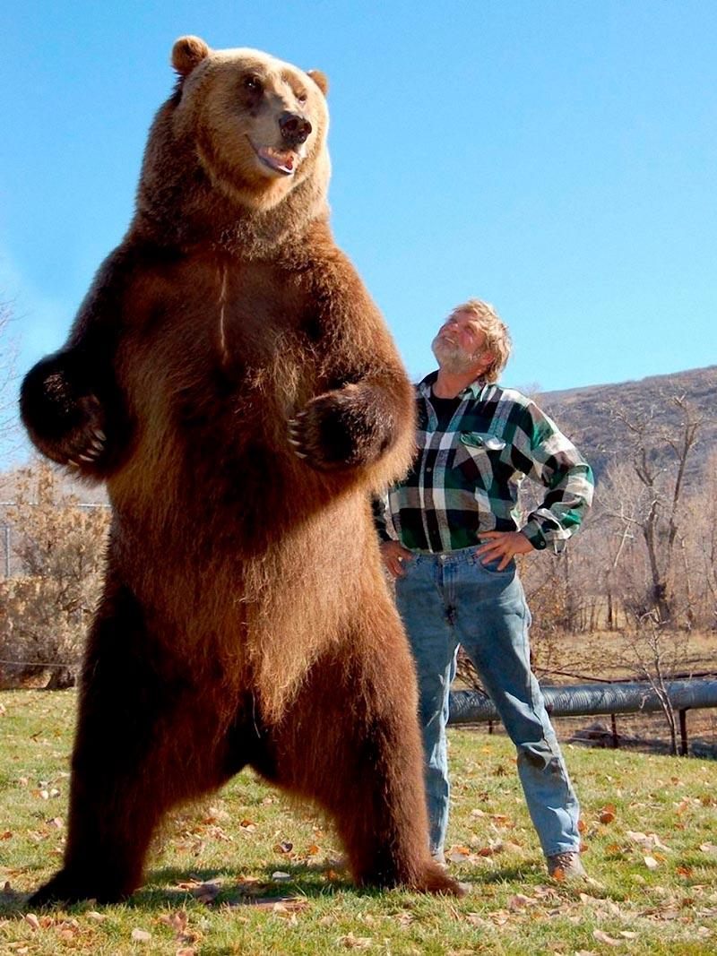 Красивые картинки, фотографии Медведя Гризли - подборка 15