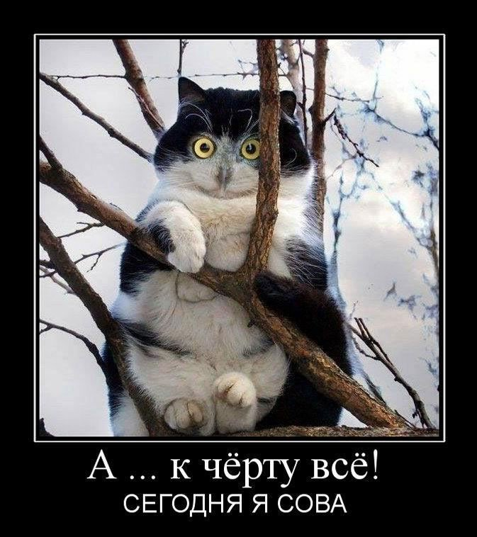 Веселые и смешные картинки, фото с текстом до слез - подборка 14
