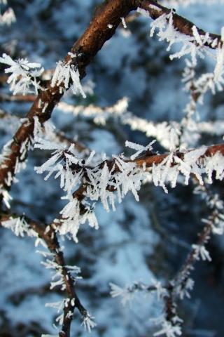 Новогодние картинки зимы 2019 на телефон на заставку 9