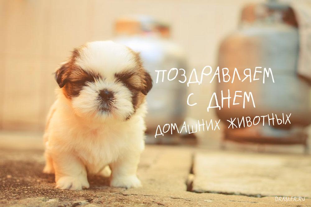 Картинки и открытки с Днем Домашних Животных - очень красивые 15