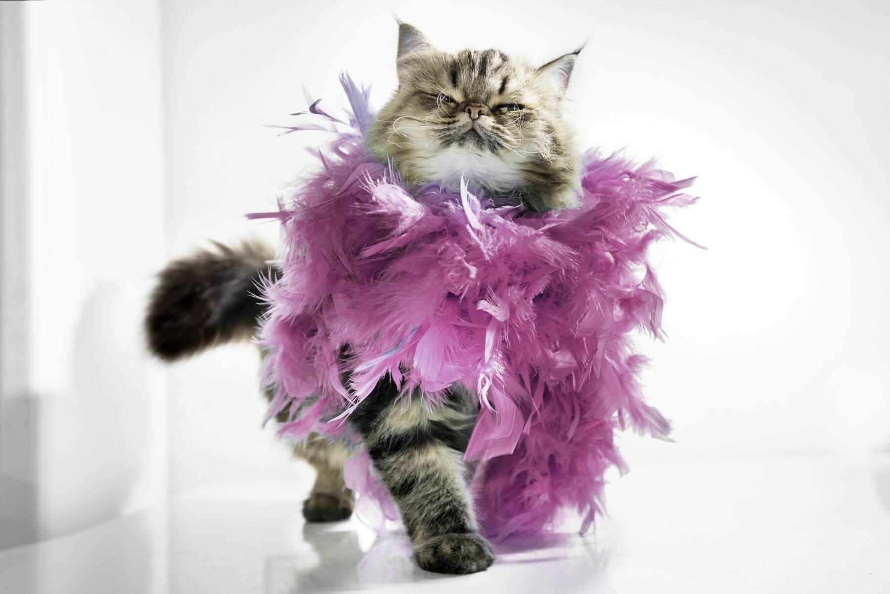 Прикольные и красивые картинки котов в одежде - сборка 7