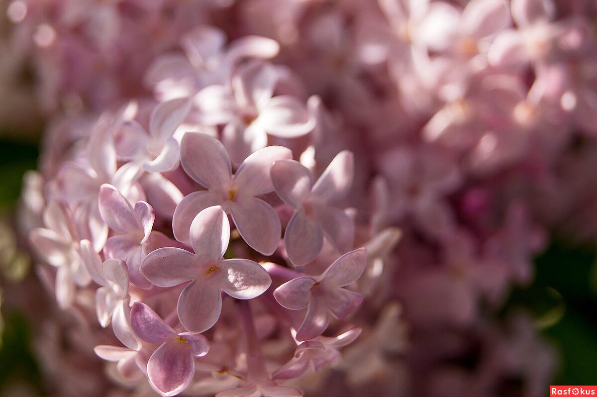 """Красивые картинки и фото """"Аромат весны"""" - подборка 2"""