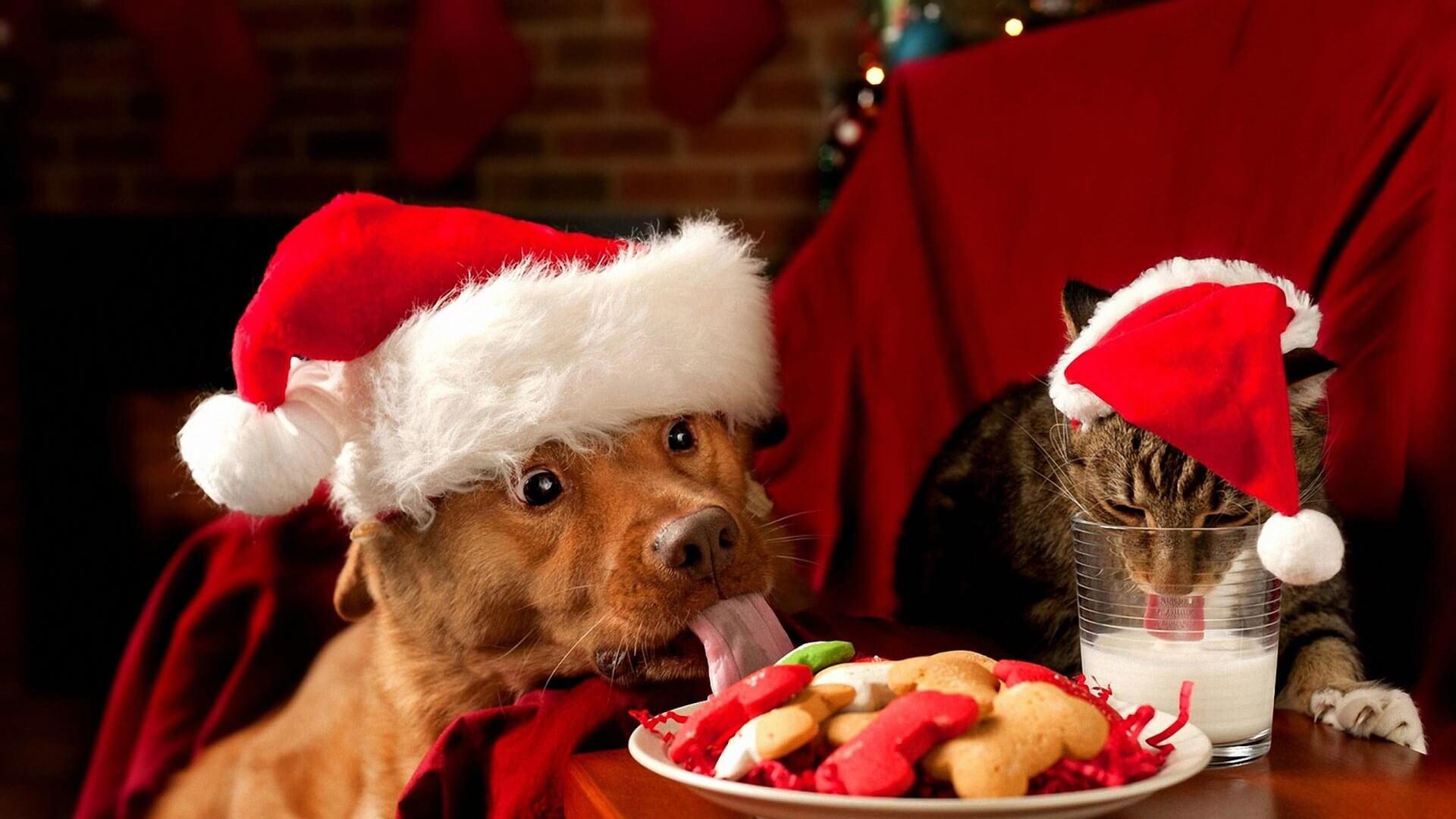 Прикольные и веселые картинки про Новый год - забавная подборка 1