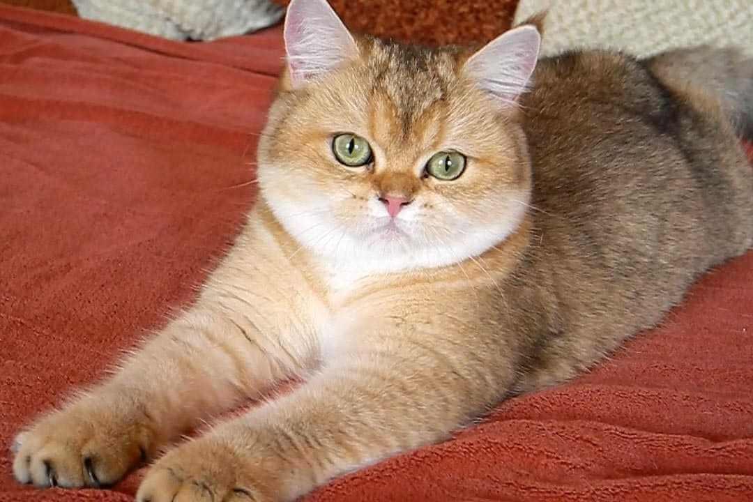 Классные и прикольные фото котят, котиков - подборка за 2018 год 2