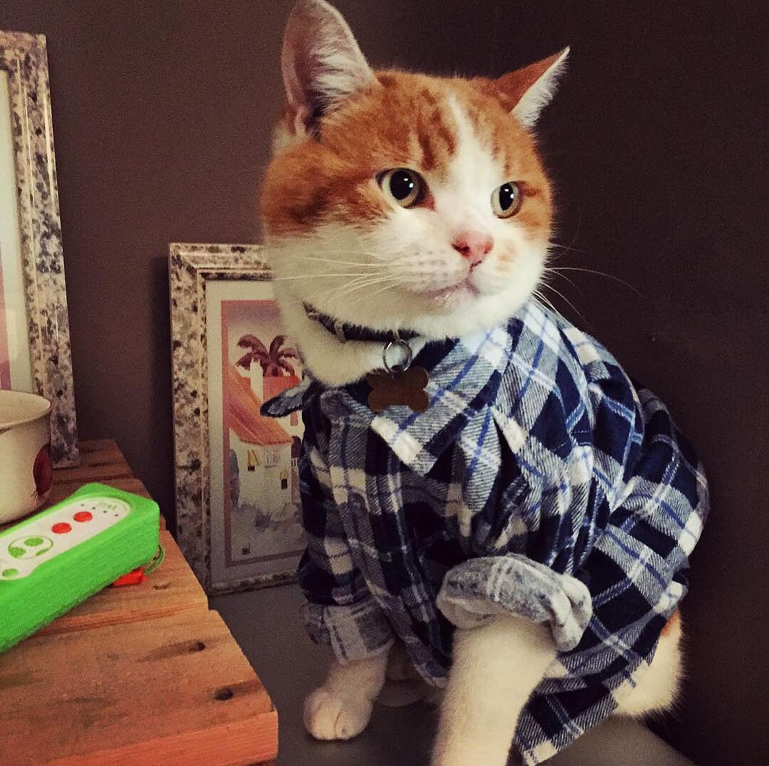 Прикольные и красивые картинки котов в одежде - сборка 8