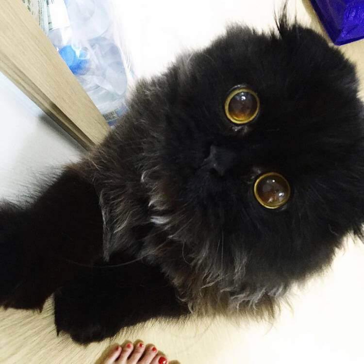 Кот Гимо с милыми глазами - необычные и красивые фото 4