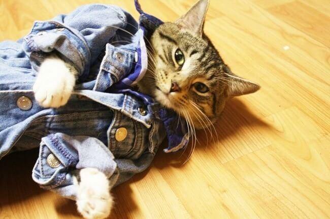 Прикольные и красивые картинки котов в одежде - сборка 10