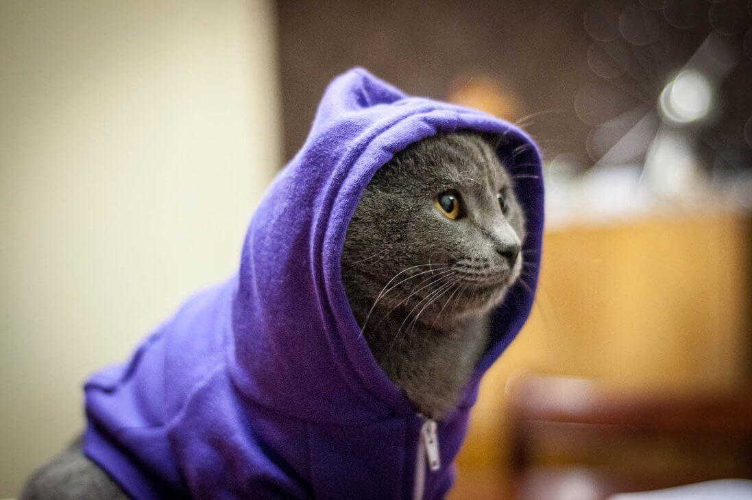 Прикольные и красивые картинки котов в одежде - сборка 11