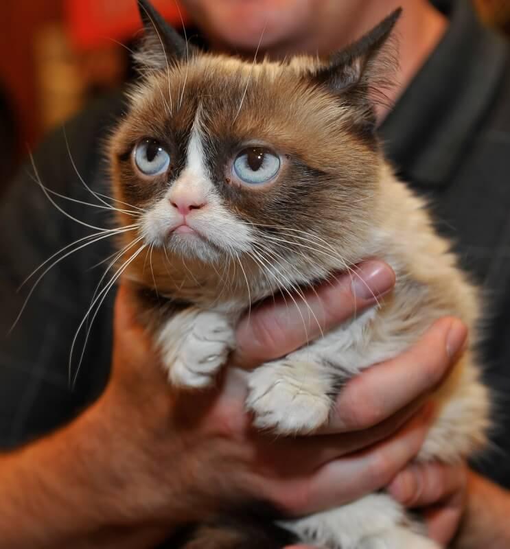 Классные и прикольные фото котят, котиков - подборка за 2018 год 5