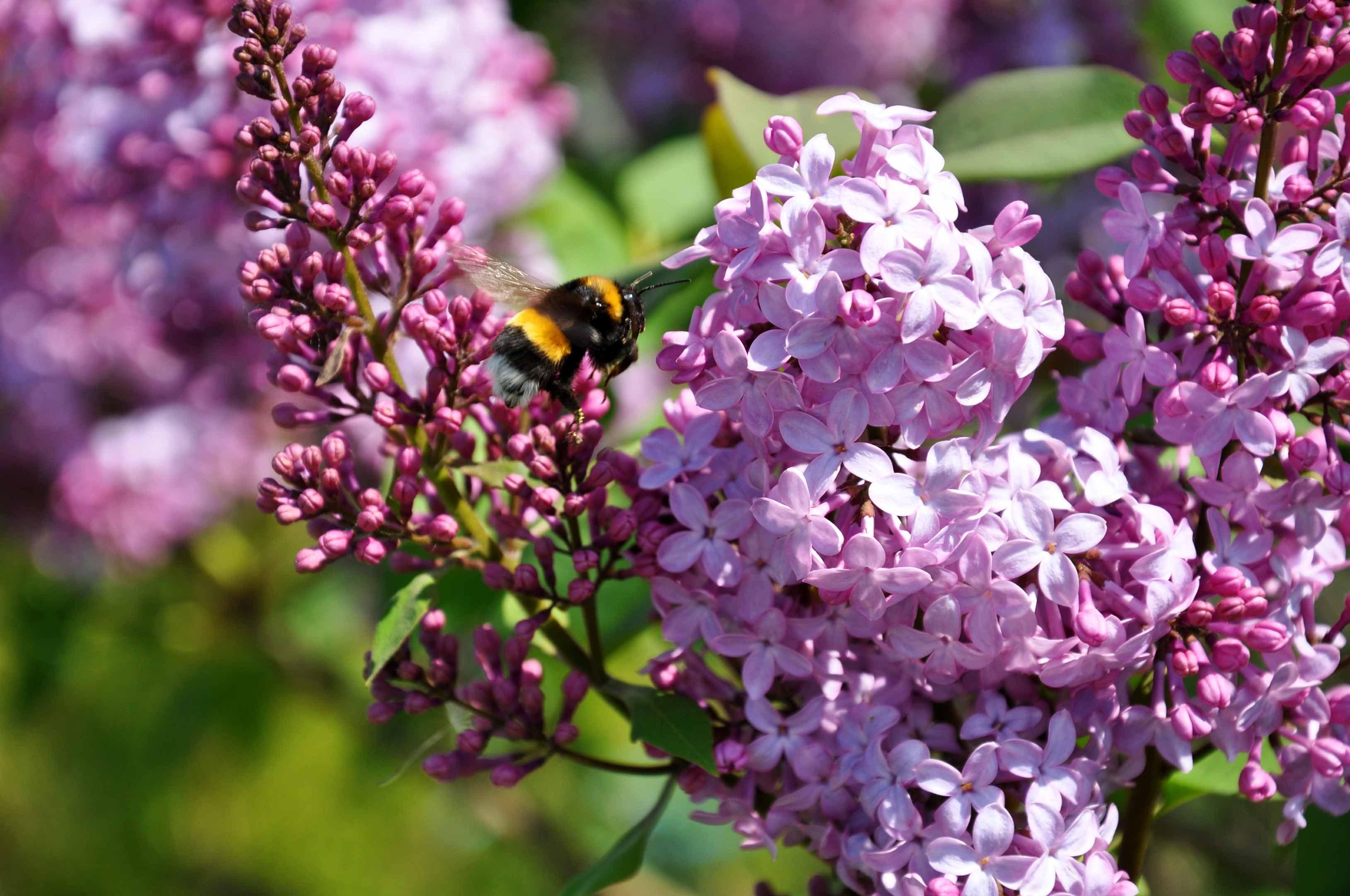 """Красивые картинки и фото """"Аромат весны"""" - подборка 6"""