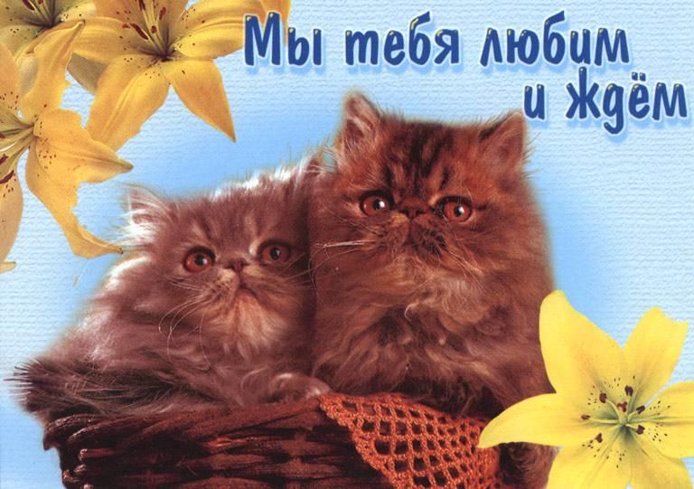 """""""Жди нас"""" прикольные картинки и открытки с надписями 11"""