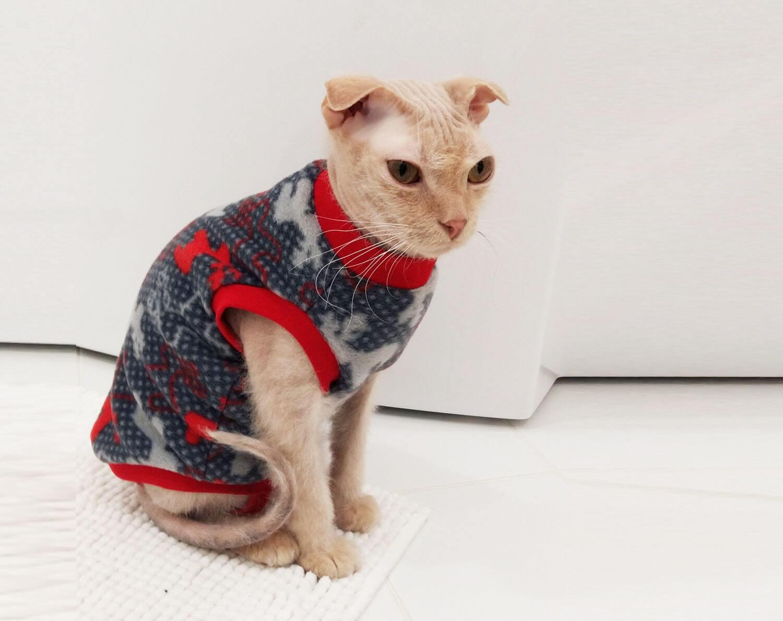Прикольные и красивые картинки котов в одежде - сборка 3