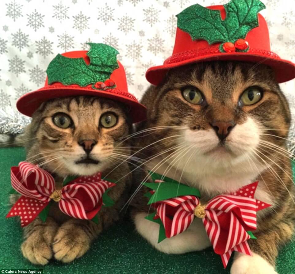 Прикольные и красивые картинки котов в одежде - сборка 2