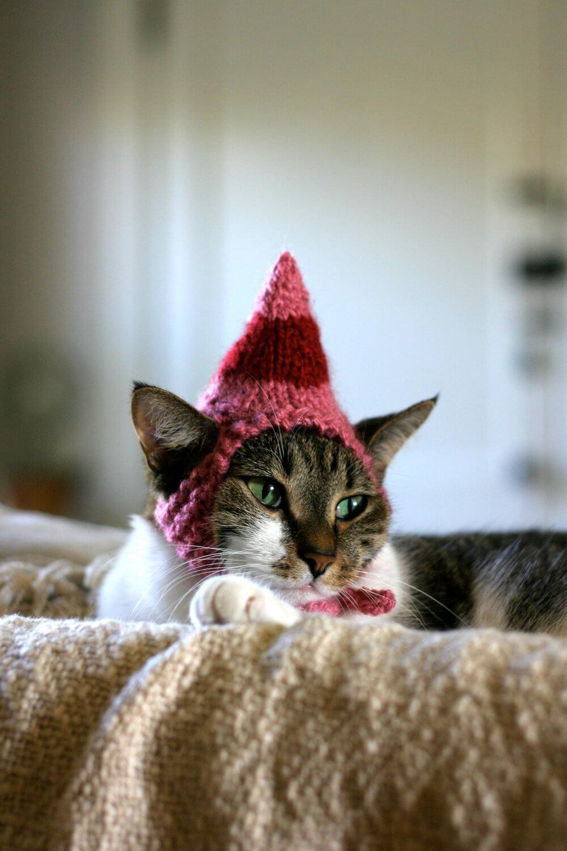 Прикольные и красивые картинки котов в одежде - сборка 4