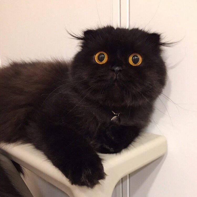 Кот Гимо с милыми глазами - необычные и красивые фото 5