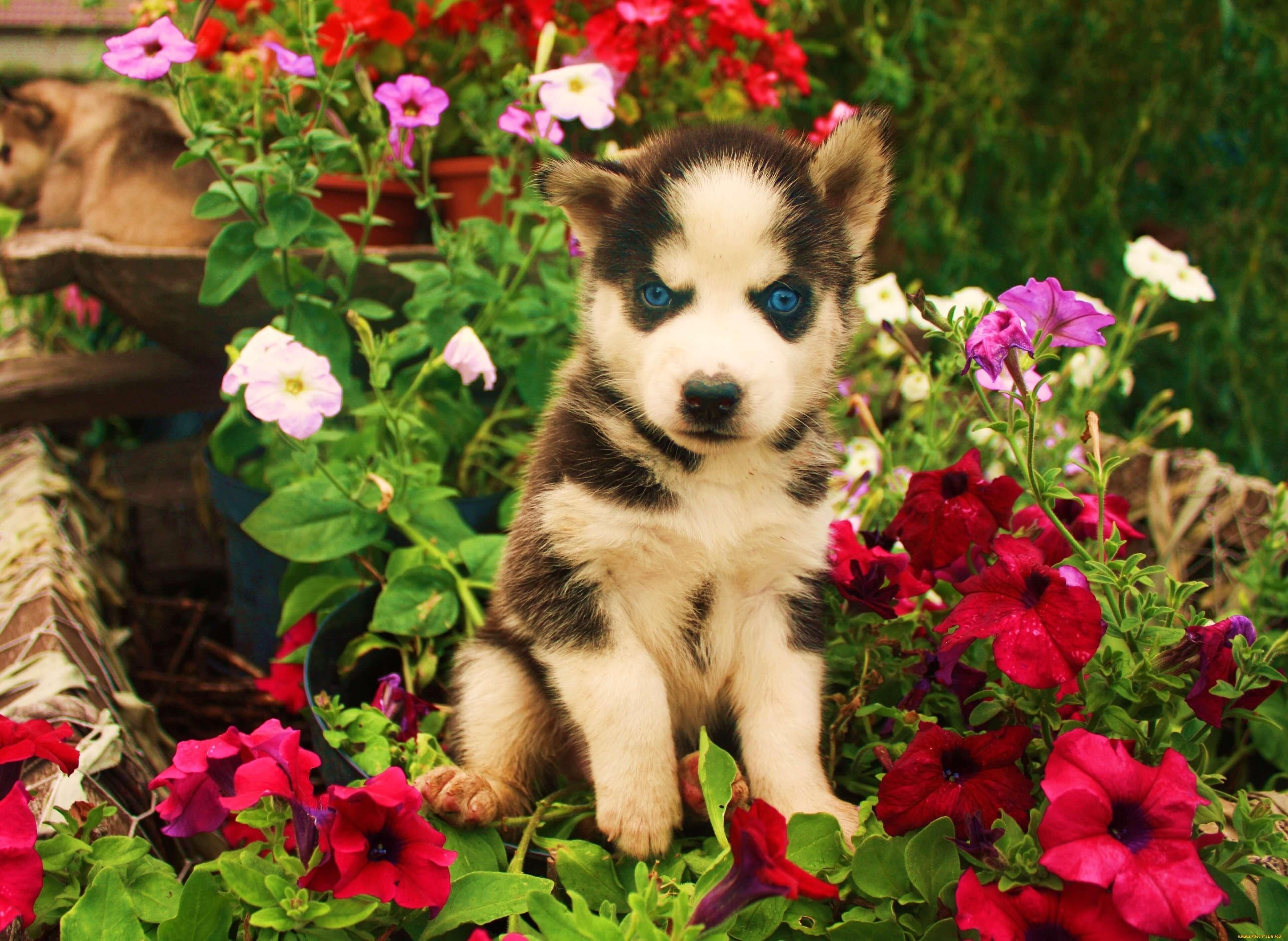 Красивые картинки с животными и цветами - самые интересные 3